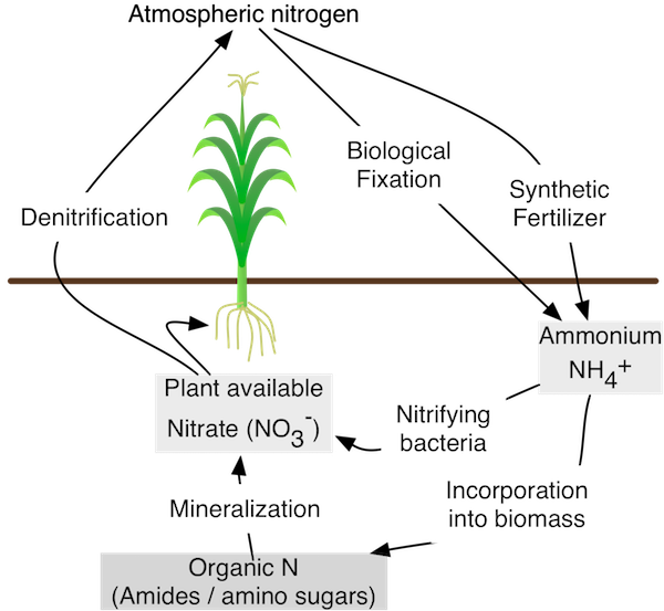 The nitrogen cycle, simplified